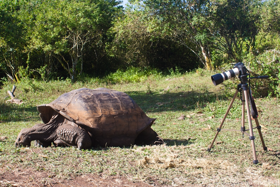 Camera tripod and giant tortoise