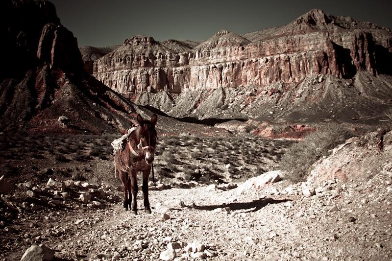 Havasu Canyon-2