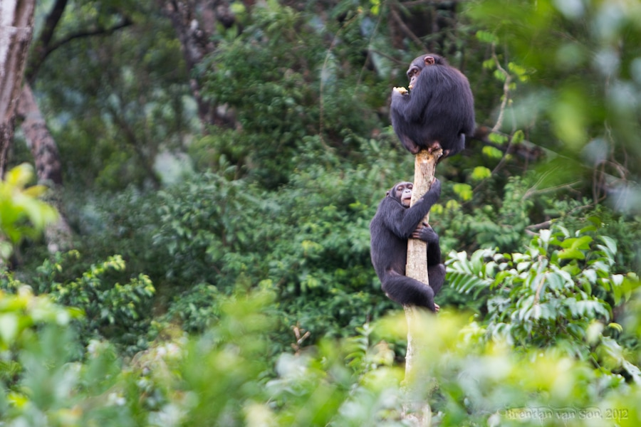 Tacugama Chimpanzee Sanctuary Sierra Leone