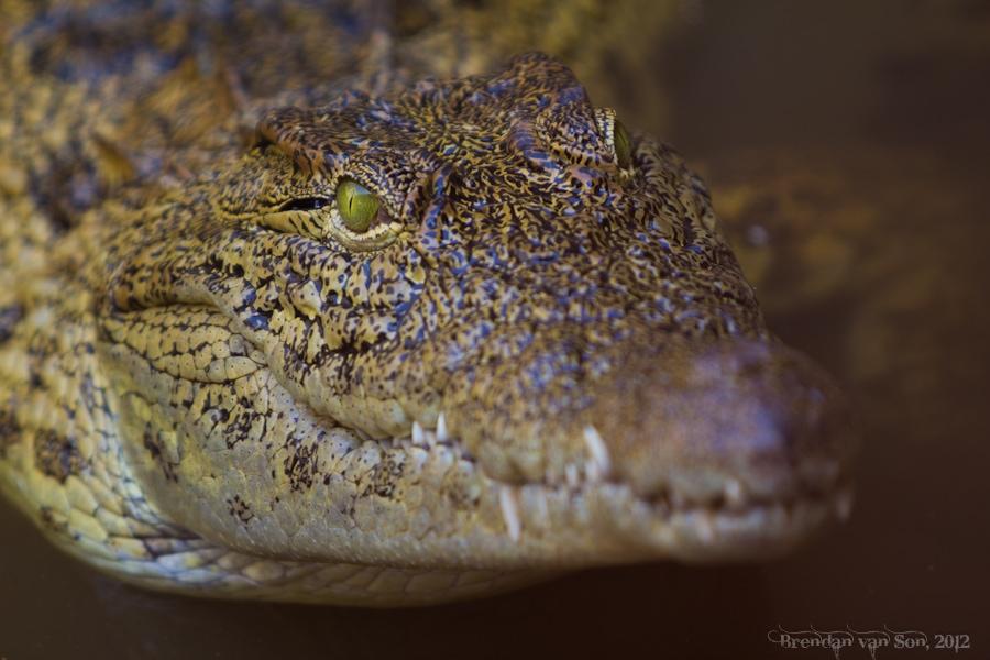 Crocodile, Mali