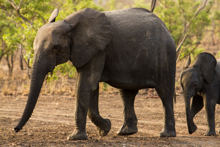Elephant Nazinga