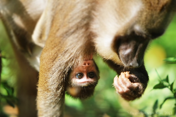 Drill Monkey, Afi Drill Ranch, baby