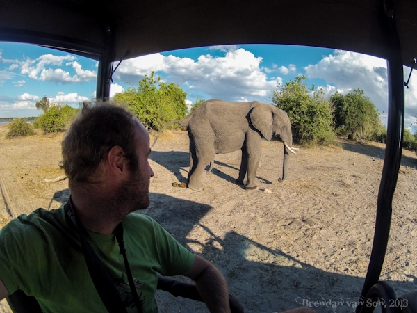 Watching an elephant take a shit in Chobe, Botswana