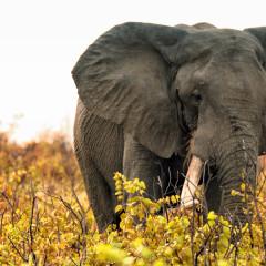 Video: Kruger National Park