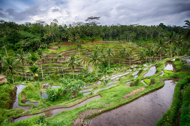 Ubud, rice terraces