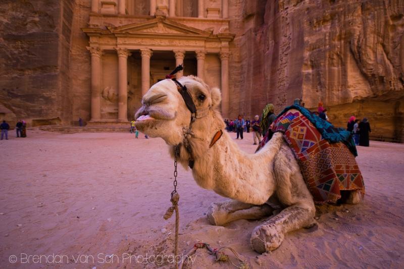 Camel, Petra, Jordan