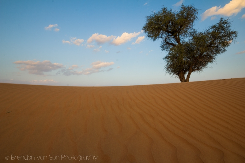 tree Wahiba Sands Oman