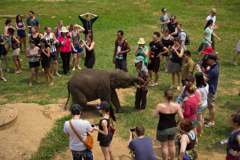 Elephant Nature Park Chaing Mai
