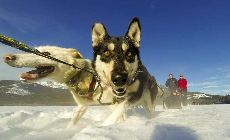 Dogsled, Canada