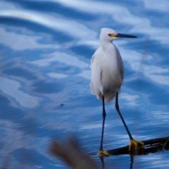 Bird Photography at Merritt Island with a Canon 2x Extender