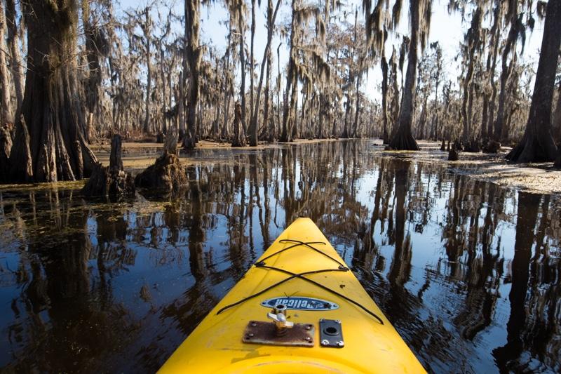 Swamp New Orleans