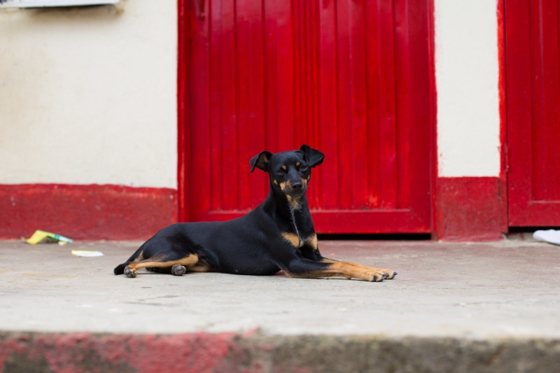 Dog, Medellin, Colombia
