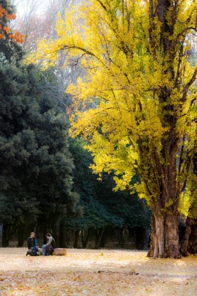 Parque Boliviar