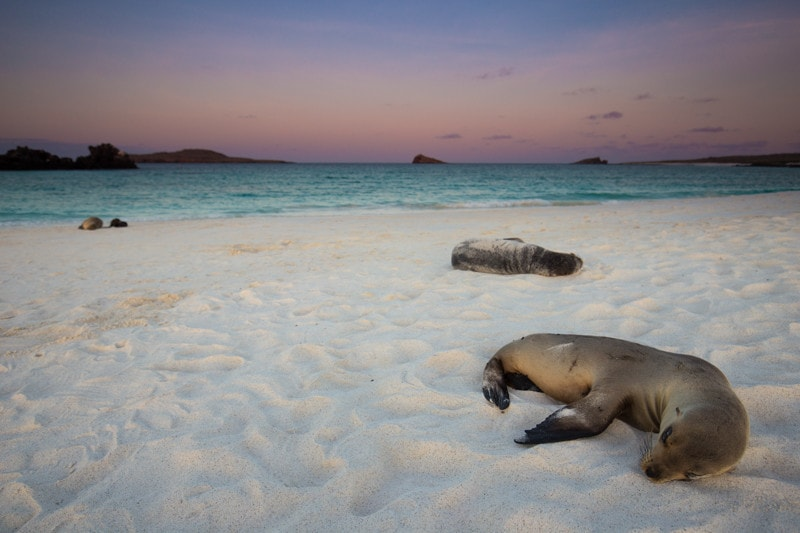 Gardner Bay, Galapagos Islands
