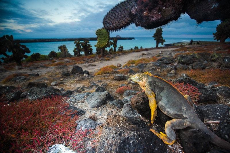 Santa Fe Island, Galapagos Islands