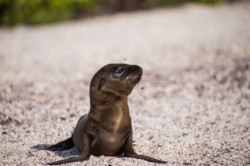 Suarez Point, Galapagos Islands