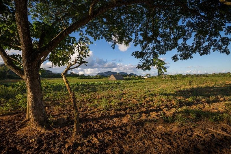 Tobacco Farm, Vinales, Cuba