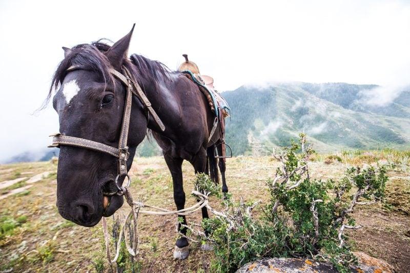 Kyrgyzstan Horse