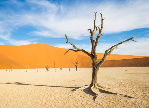 15 Pieces of Photographic Evidence of Why You Should Come to Namibia