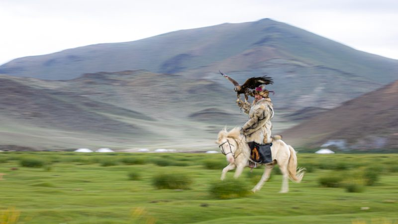 An eagle hunter galloping his horse